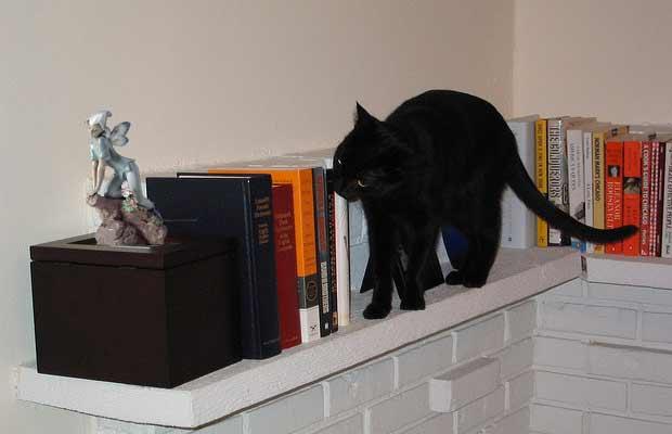 El gato palanquín